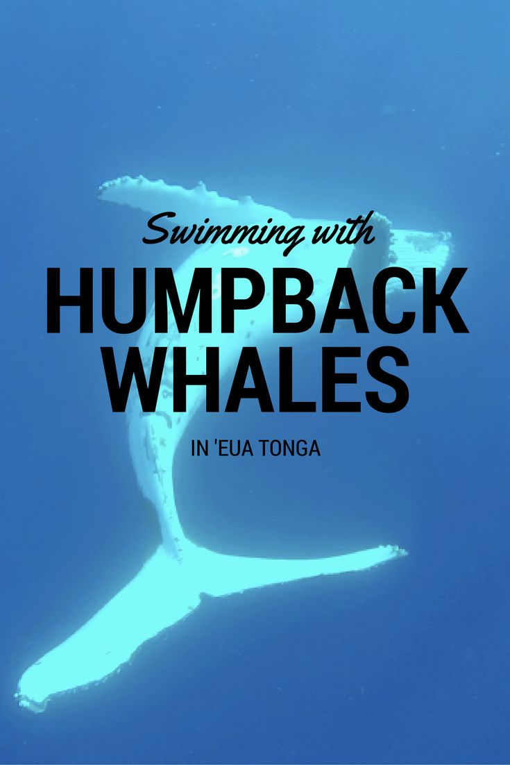 Tonga is one of the only places in the world where it's legal to swim with humpback whales, so I took a trip to 'Eua to swim with these gentle giants.