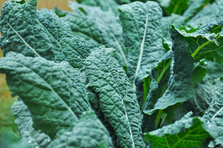 Is Kale really bad for you?