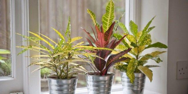 Правильное питание комнатных растений