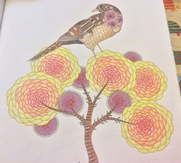 Bird in the tree from animal kingdom