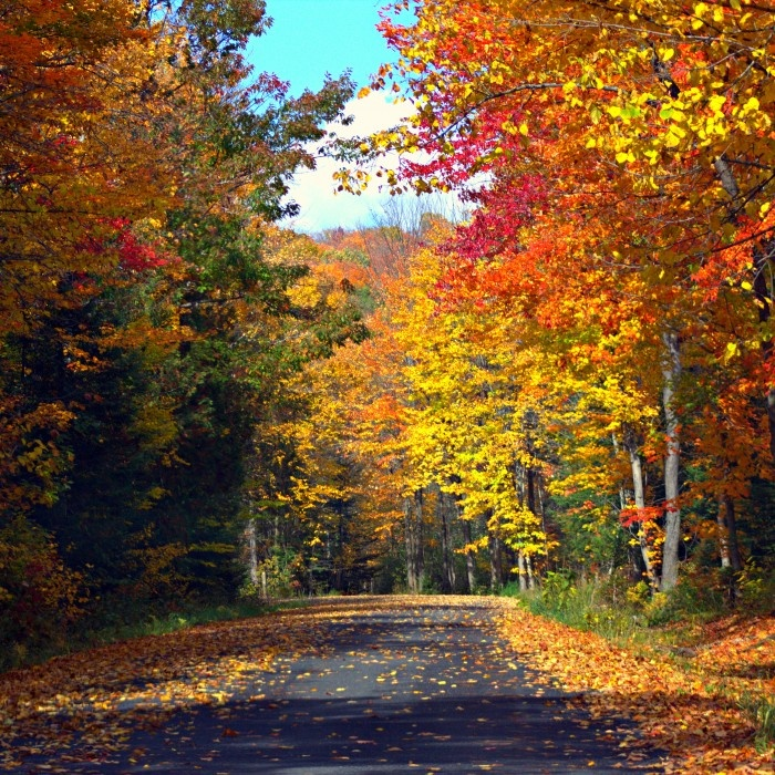 The Fall Colours in Haliburton Highlands.