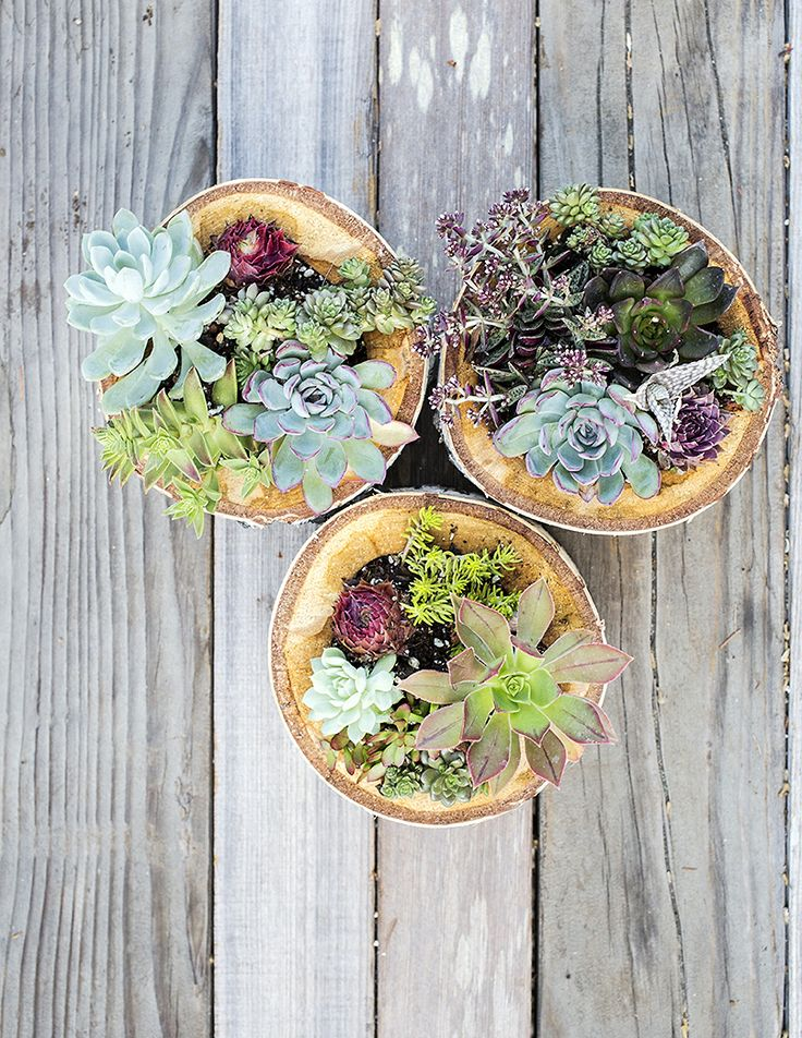 75 best succulents images on pinterest succulents cacti for How to keep succulents alive indoors