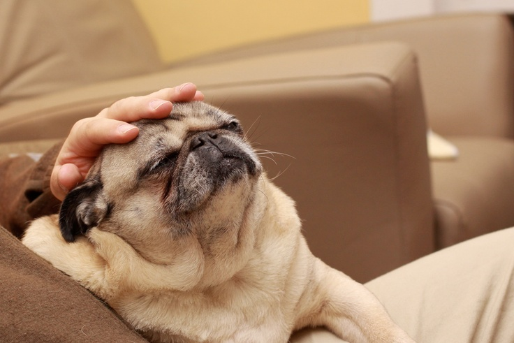Ginger Can Ease Dog S Motion Sickness