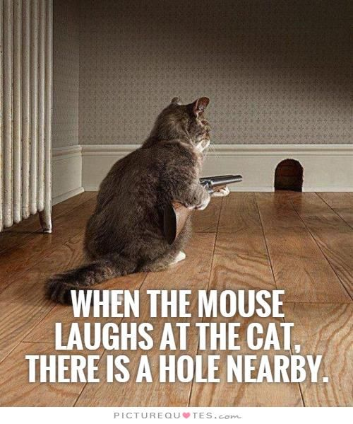Quotes About Cats 156 Best Cat Quotes Images On Pinterest  Quotes About Cats Cat .