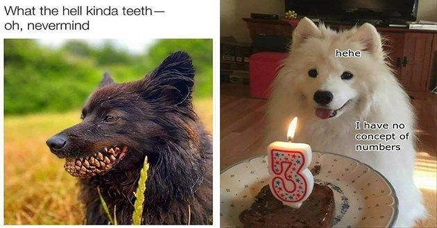 Slobbery Kissing Dog Memes 28 Memes In 2020 Animal Memes Dog Memes Funny Dogs