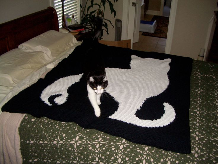 1000 Images About Kitty Crochet On Pinterest