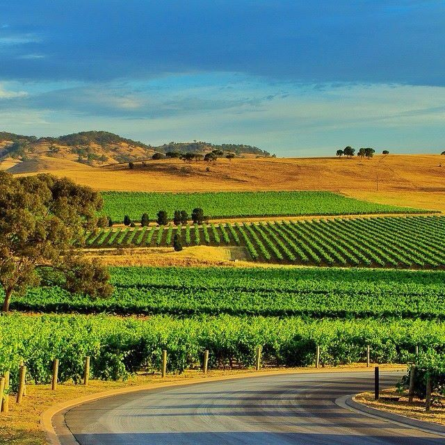 """Kellermeister Wines Vineyard in South Australia""""s beautiful Barossa Valley, with more than 90 cellar doors and a 150 wineries... Wine anyone?"""