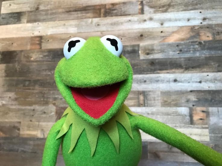 """3,426 Likes, 158 Comments - Kermit the Frog (@kermitthefrog) on Instagram: """"Say bees! (Frogs don't really like cheese.) """""""