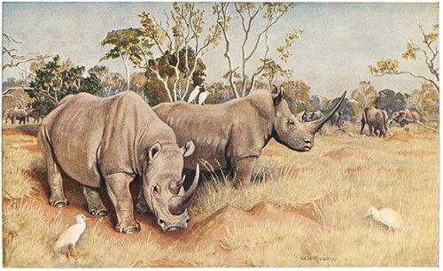 BROCKLEHURST, Captain H.C. Game Animals of the Sudan. #rhino #africa