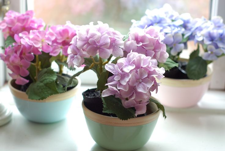 beautiful trio of colourful potted mini hydrangea flowers in pastel wooden bowls. Made to last