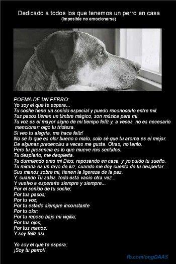 Poema De Un Perro Animal Lovers Pinterest