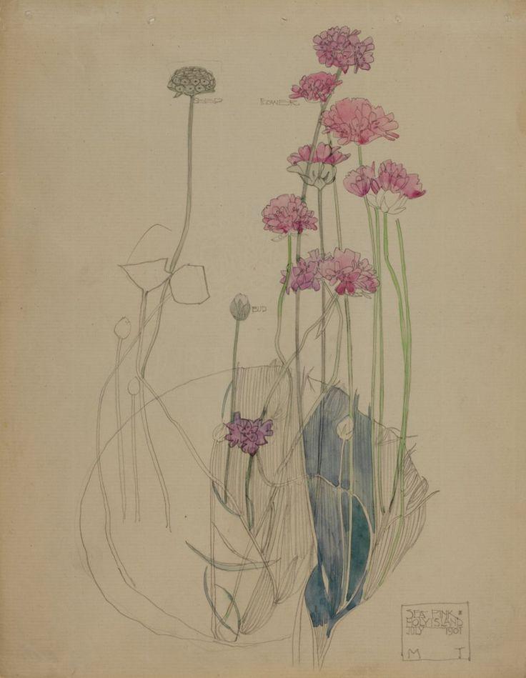 """Sea Pink, Holy Island"" July 1901  Hunterian Art Gallery Mackintosh collections, catalogue number GLAHA 41004"