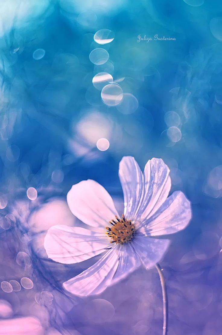 Photo: #flowers  #flowerpower  #naturephotography  #summer  #цветы  #космеи