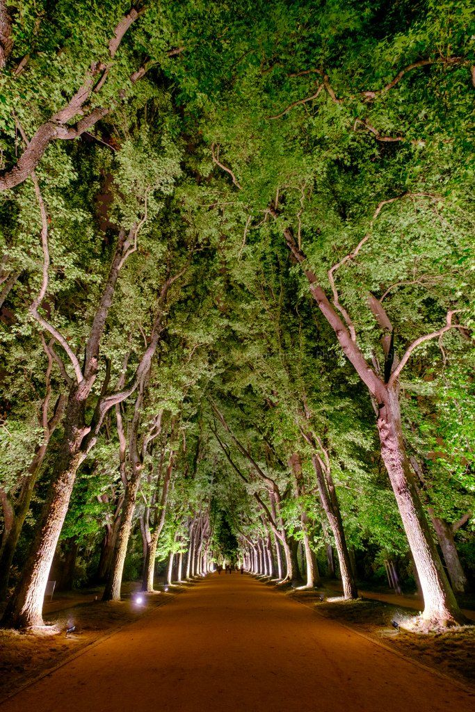 Liquidambar avenue - Photo Attraction Fotografia
