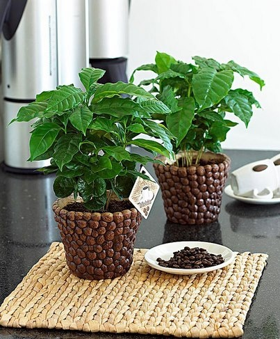 DIY. Ideas para decorar con granos de café.