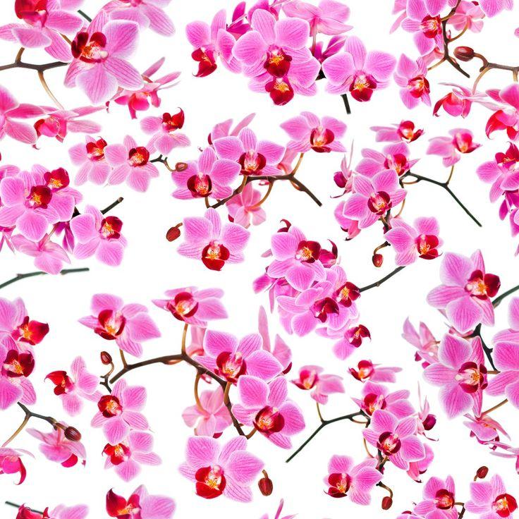 Fotobehang: Roze Orchideeën - voor een vrolijke slaapkamer! Maar € 11,95 per m2 en op maat gemaakt!