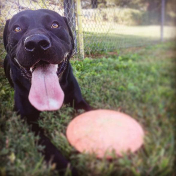 Throw it again! - Hurricane Valley Park - Hurricane, WV - Angus Off-Leash #dogs #puppies #cutedogs #dogparks #hurricane #westvirginia #angusoffleash