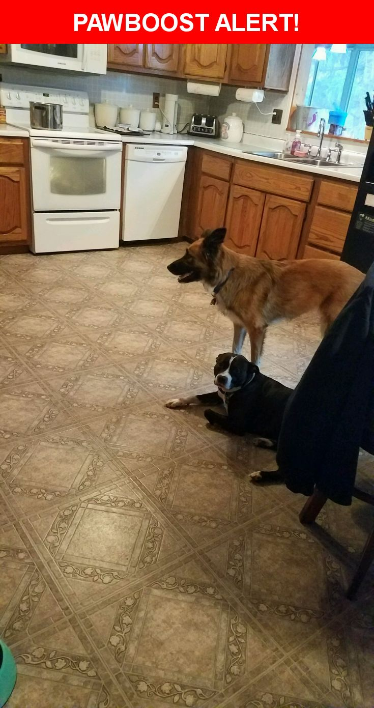 Please spread the word! Fat Boy & Milee was last seen in Columbus, OH 43228.  Description: Fat Boy is a male pittbull all black except he has a white line down his forehead and around his nose, stomach and paws with a mixture of brindle.    Milee is a female collie/ German shepherd mix they both have collars and name tags