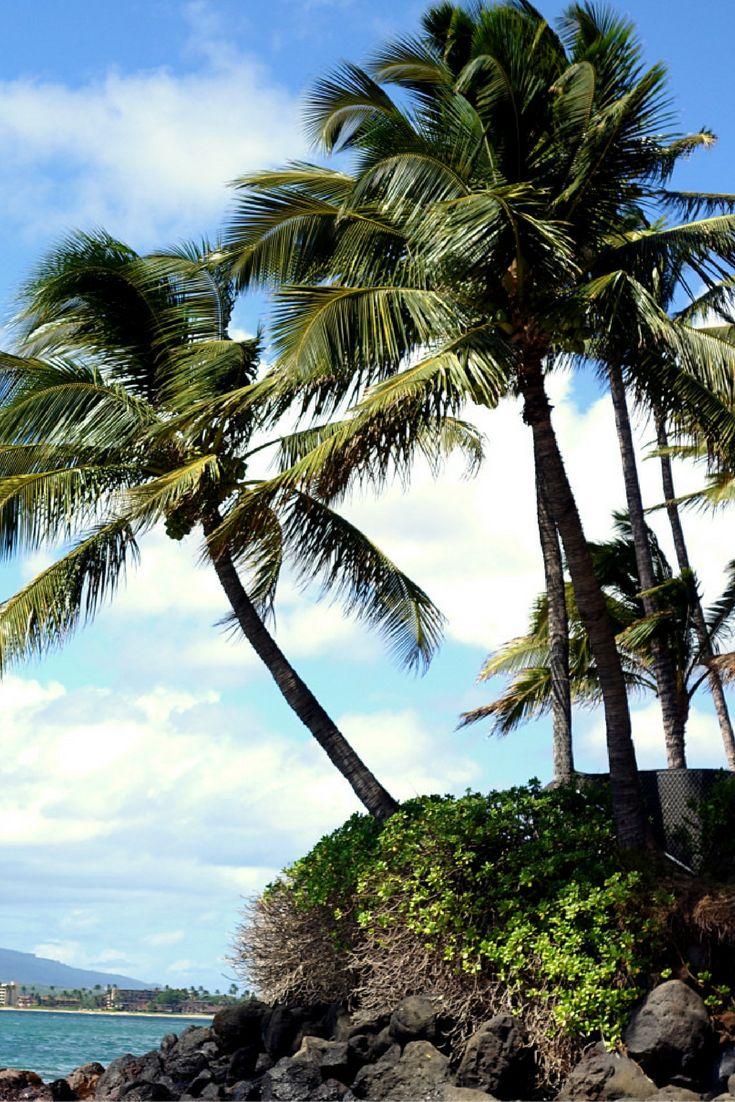 Hawaii, Maui, Palm Trees, Beach // #Travel & Lifestyle #Blog // London Blogger