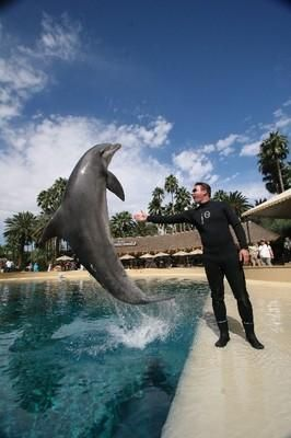 Dolphin Habitat at the Mirage. This is a great list. I will try to fit all of these into my five day trip. :-)