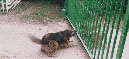 Gifs animaux drôles