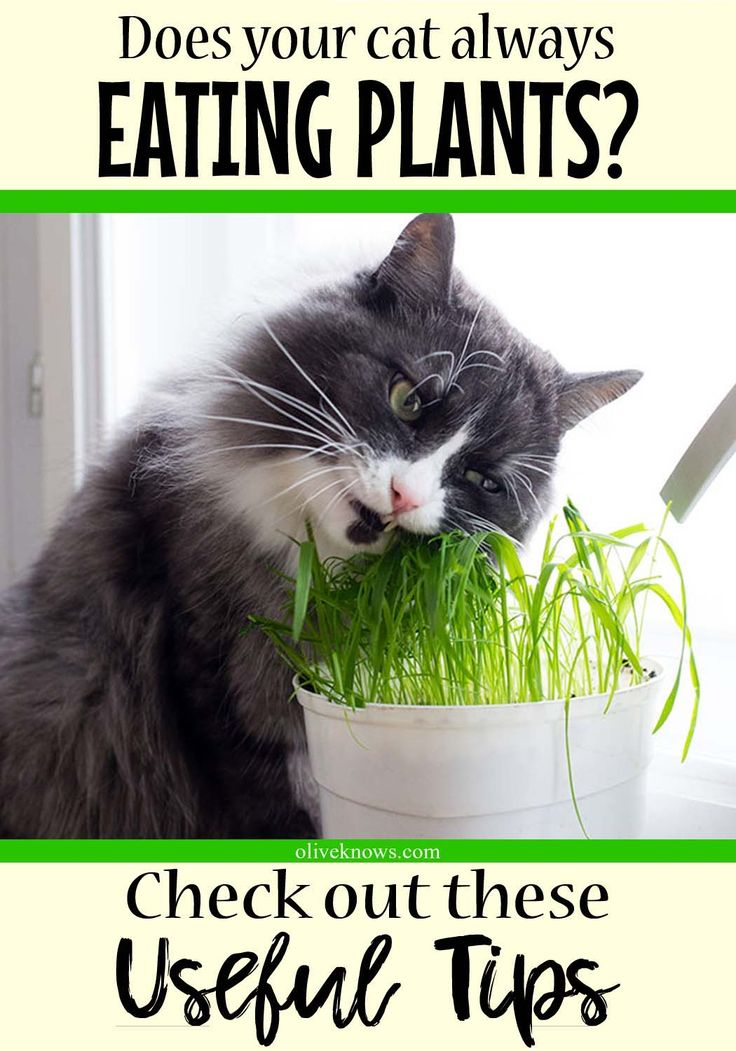How to Keep Cats from Eating Plants Cat health, Sick cat