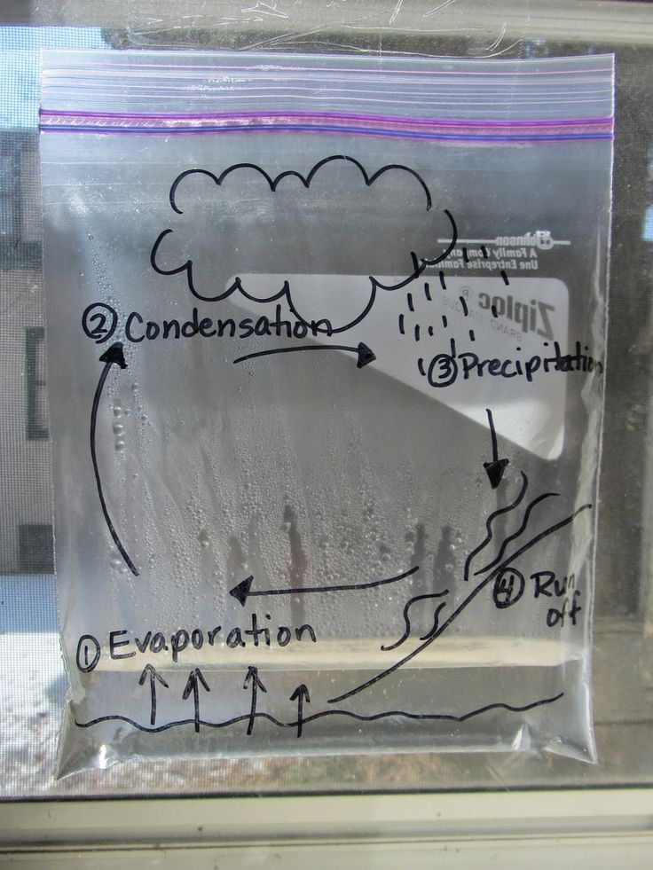 water cycle bag - I used to do this demonstration with third graders. add a drop of blue food coloring to the water if desired. A very effective experiment that works best in a sunny window.