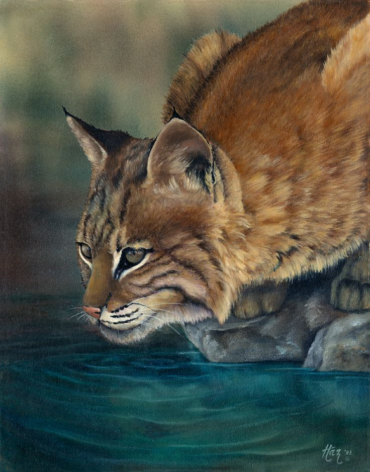 Pin by Carol Hayes on paintings by carol hayes Animals