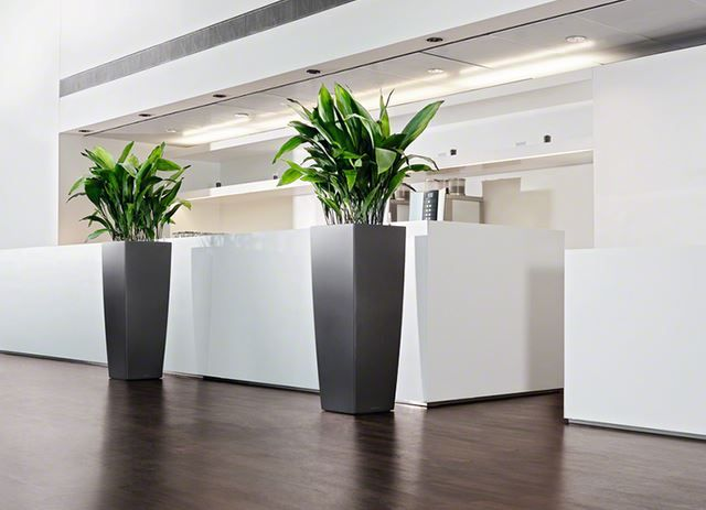 26 best office landscapes images on pinterest indoor house plants indoor plants and big - Tall office plants ...