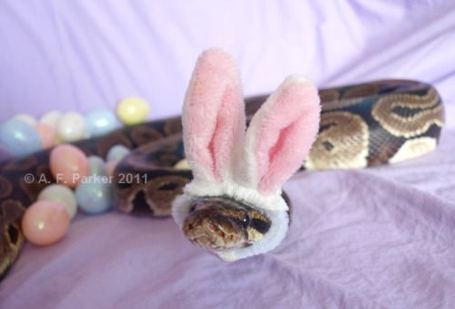 Snakes Wearing Hats - Page 1 of 2... awwww, this one is cute!!!