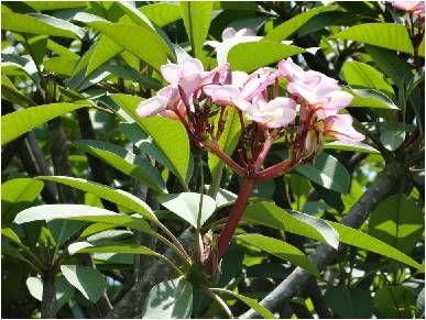 En este verano aprovecha el sol y el calor para sembrar arbustos que tengan flores llamativas. En este post les dejo algunos ejemplos de l...