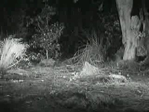 Aesop's fables: The Hare and the Tortoise (1947) --  An example of a film rendition of this classic tale.