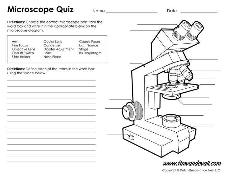 Diagram Of Microscope Example Binocular And Their ...
