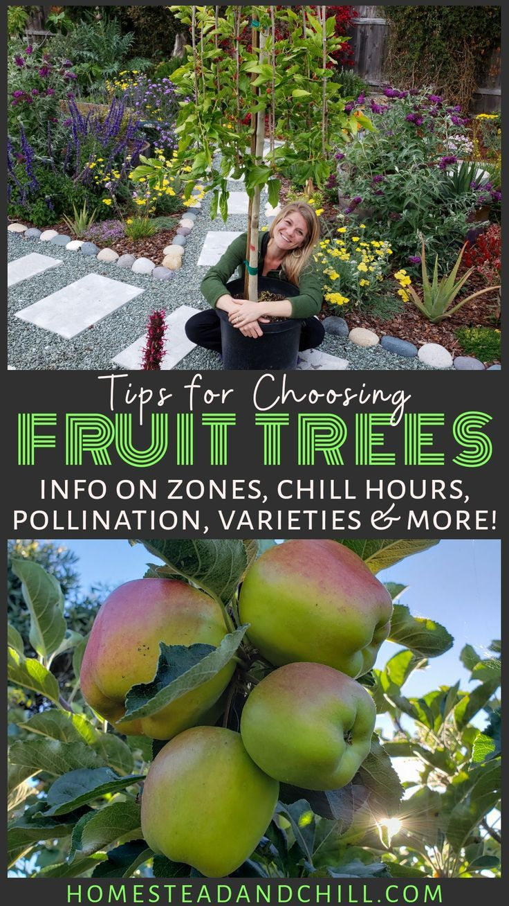 How To Choose What Fruit Trees To Plant Climate Varieties More Homestead And Chill Fruit Trees Backyard Fruit Bushes Fruit Trees