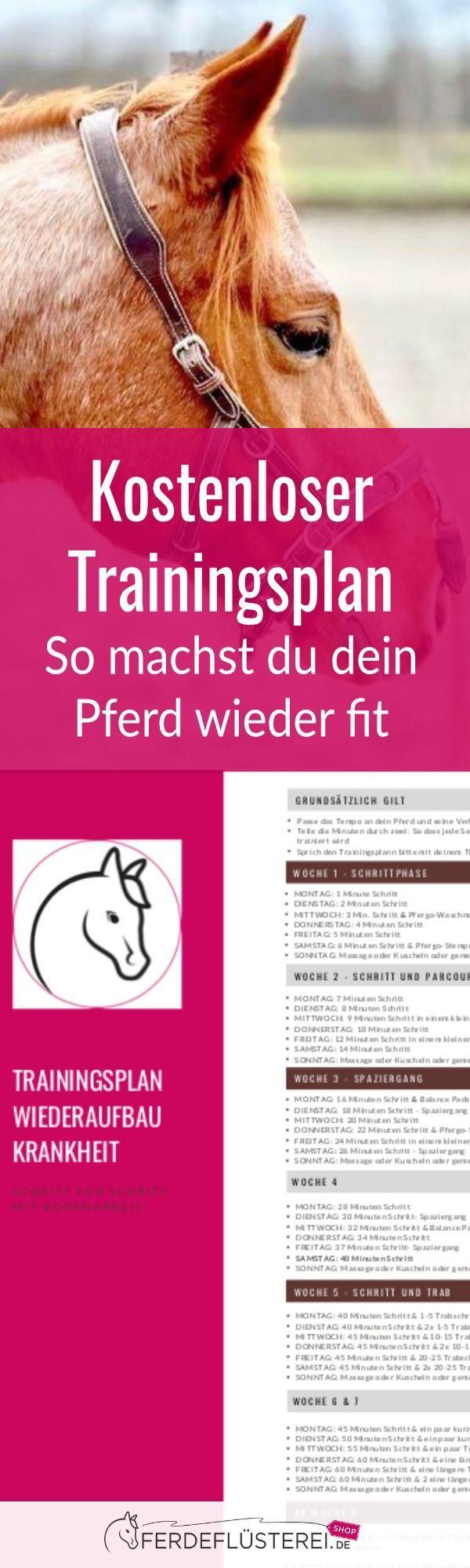 Trainingsplan nach der Pause! So machst du dein Pferd wieder fit