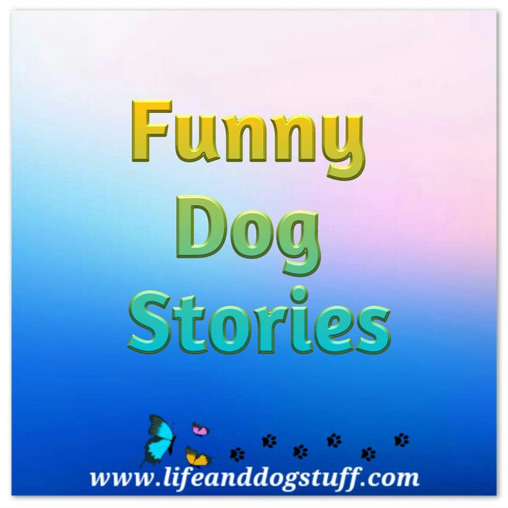 Pinterest board cover for funny dog stories.