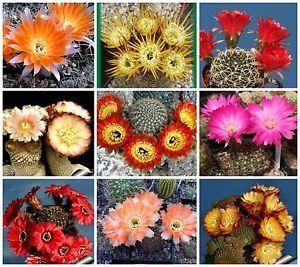 Ofertas en Semillas de Cactus, Semillas de Suculentas y Lithops. Envíos a todo Argentina por Correo Argentino. Aproveche las ofertas con envíos gratis!
