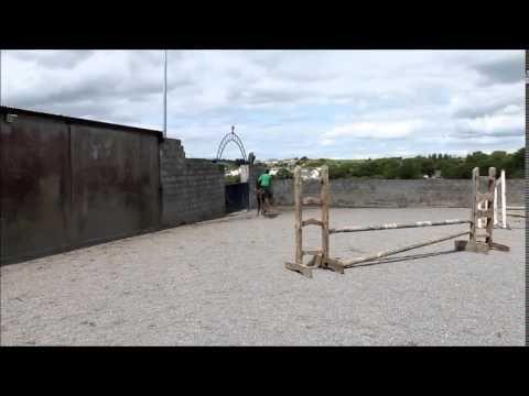 Grey cob for sale in Ireland. Sandy 15.2 2012 Irish cob mare. #loveirishhorses #horseforsale