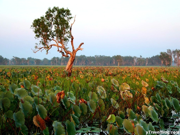 Australia's Famous Kakadu National Park in Photos: http://www.ytravelblog.com/kakadu-national-park/