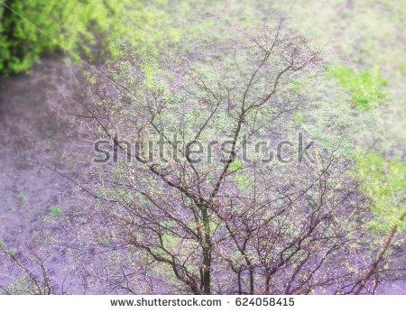 Branches of trees against the background of spring grass. Natural background.