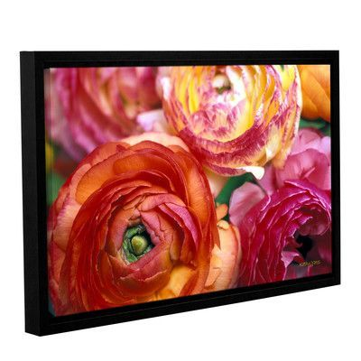 """ArtWall Ranunculus Close Up by Kathy Yates Framed Photographic Print on Wrapped Canvas Size: 8"""" H 12"""" W"""