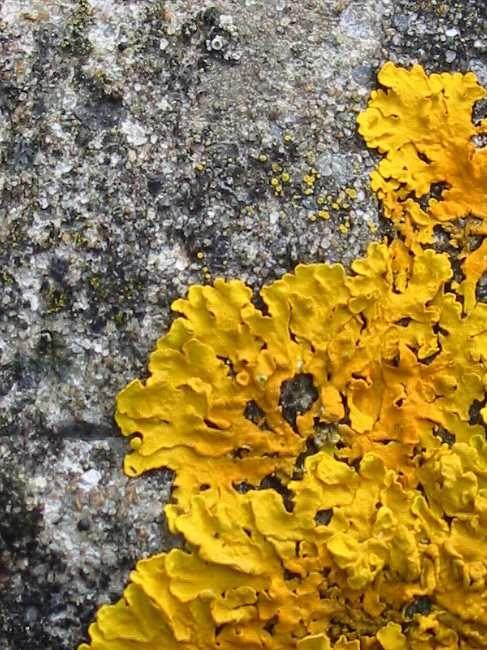 Lichen More