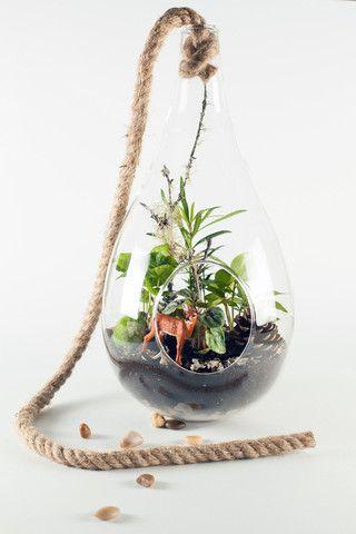Flora and Fauna Suspended! From Twig Terrariums | #miniaturegarden #miniterrariums