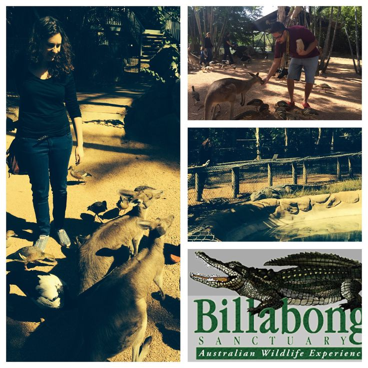 Billabong sanctuary  We invested in a $2 bag of seed for the super friendly birds and kangaroos. The crocodiles were huge, as was the grumpy python, got to pat a koala, but by far the coolest character of the day was Jacko the cockatoo. He said 'hello' in return for the sunflower seeds.