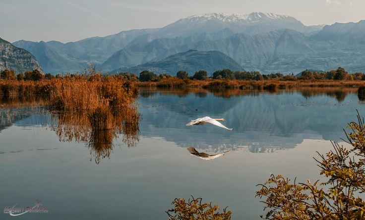 Cigno2 by FotoBrescia Manzari Domenico on 500px