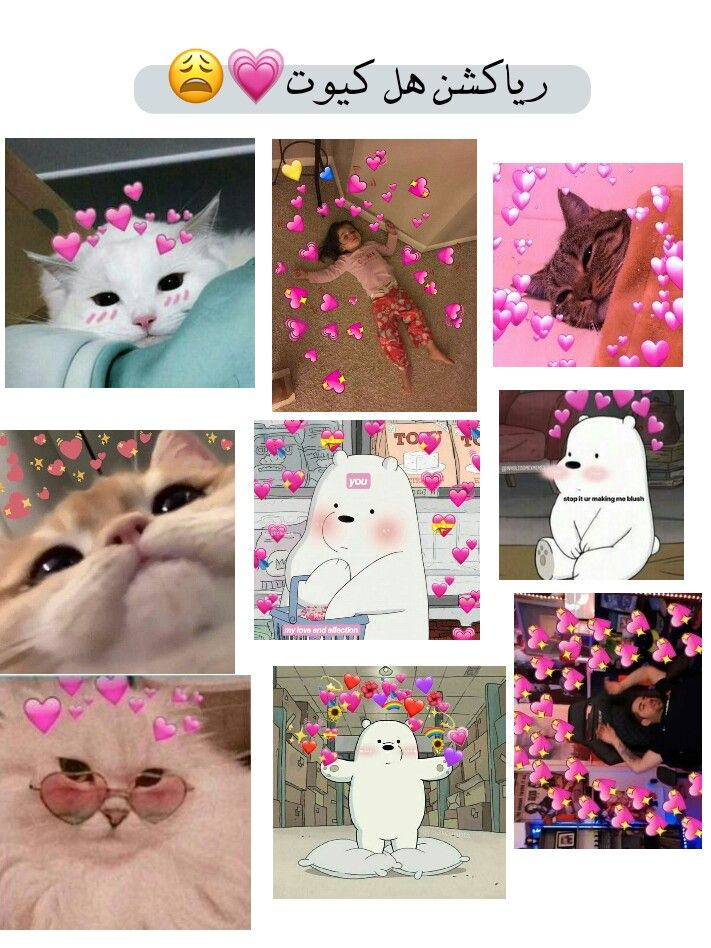 افتار شباب بنات خلفيات كيوت ترتيب ستوري سناب انستا تويتر تلكرام رياكشن دبب الثلاث Cute Baby Cats Funny Picture Quotes Baby Cats