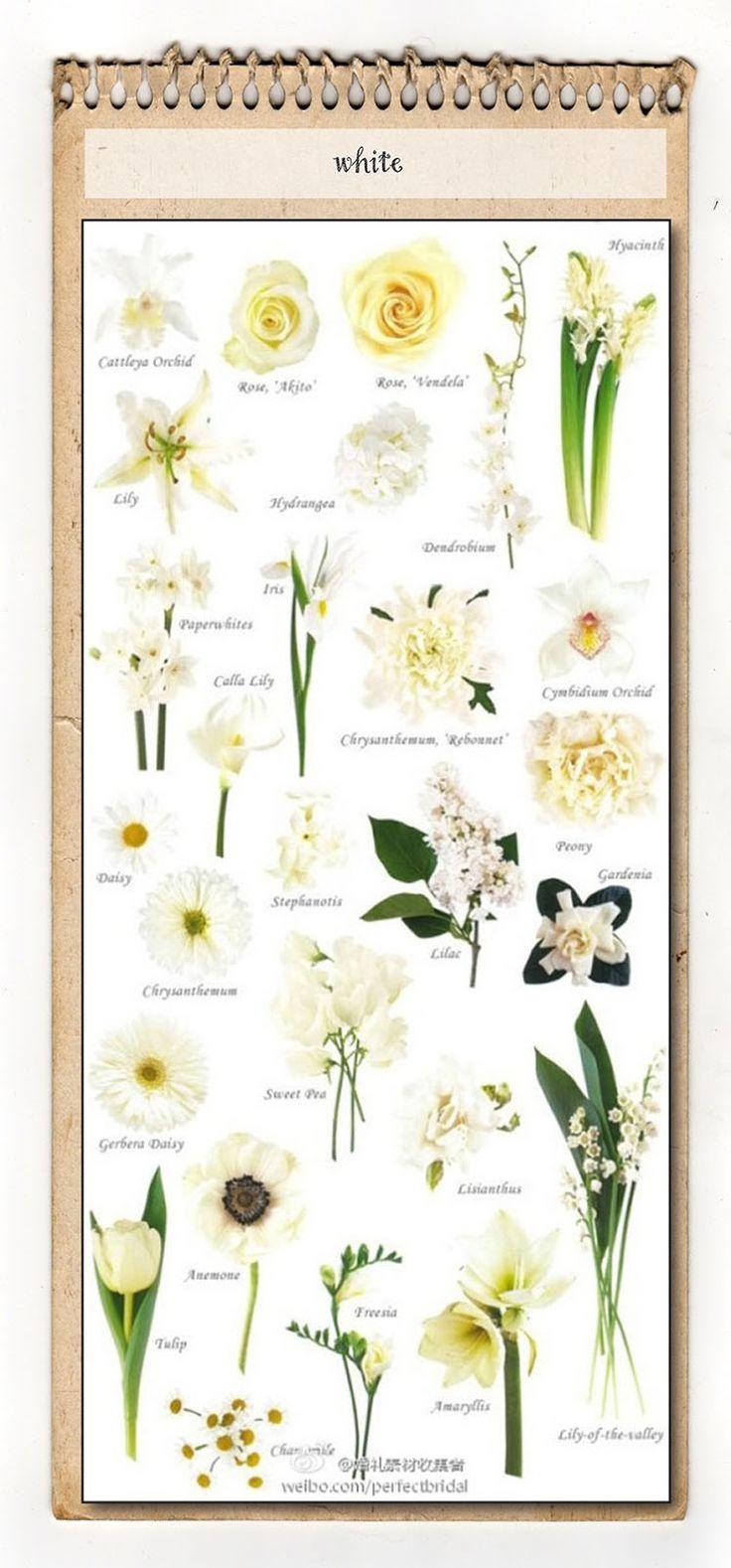 White Flower Chart | Event-Decó | Pinterest