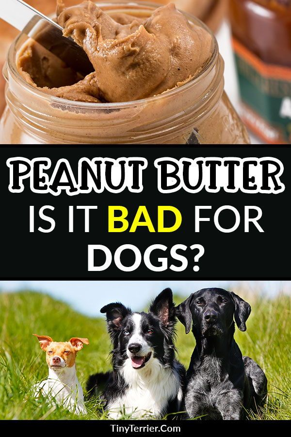 Can Dogs Eat Peanut Butter In 2020 Can Dogs Eat Dog Eating Peanut Butter