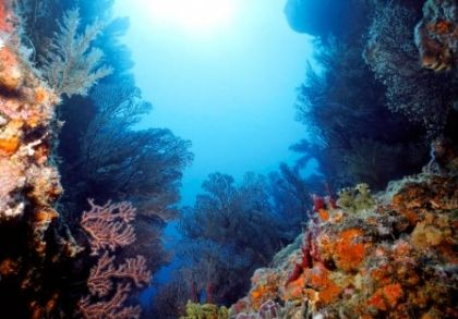 Caribbean reef    iStockphoto.com/Dennis Sabo