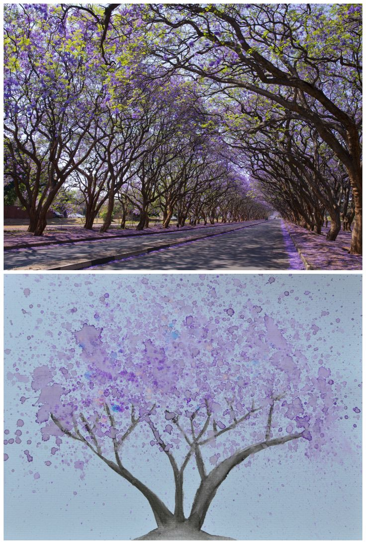 41 best jacaranda trees images on pinterest jacaranda trees easy and beautiful jacaranda tree watercolour painting tutorial for kids from be a fun gumiabroncs Gallery